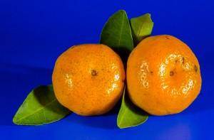 orange-213548_1280